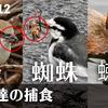0112【鳥が蜘蛛ザリガニ蜂を捕食】小さな猛禽モズ、カイツブリ、ハクセキレイ。ジョウビタキが紫式部を、シジュウカラが種子を食べる。雪降らず雨天撮影【 #今日撮り野鳥動画まとめ 】 #身近な生き物語 鶴見川水系恩田川の野鳥