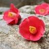 立春間近だけど春はまだ遠く、真冬に着たくなる椿柄の着物