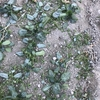 凍り付いた畑