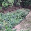 キレンゲショウマ受難:九州の脊梁山地をまわって