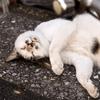 映画「cats」を観た感想
