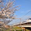 春の足跡② 開花編