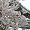 【ジャンクション萌え】辰巳JCTと桜