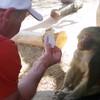 魔術を見た猿の反応!!