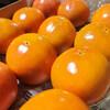 庭の柿の木に柿がたくさん実りました