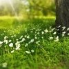 食べなきゃ損!春菊は見た目は地味でも栄養の宝庫!