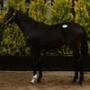 武豊 騎乗予定の2歳新馬ハートリッチは勝ち上がれるやろか?
