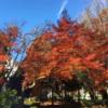相模原市 中央区 中央公園の紅葉 (12月5日現在)