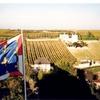 シノンワインのブドウ畑(フランス、ロワール地方)