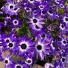 【愛を奏でる花の魅力】見返りを求めず「与えるだけそれでいいです」