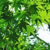 【おとなの自然観察 実践レビュー 初心者編】自然教育園と日比谷公園で実践例をご紹介