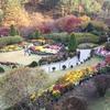 【韓国旅行・観光・加平】韓国ドラマのロケ地としても有名な「アチムゴヨ樹木園」が楽しすぎました