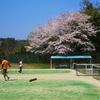 COVID-19と桜 【自転車】