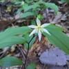 高尾山、美しき花の山
