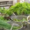 山菜を食べる会