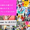 【ホココス】結局コスプレってなんなの?~名古屋の大通りがカオスな件~