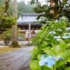 蓮寺🌸青原寺(せいげんじ)|長野県安曇野市