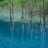雨の早朝 青い池