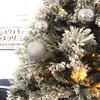 2017/11/2 テーマ水槽・デンキウナギでクリスマスツリー点灯!?
