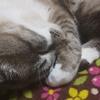 猫を飼っている方はペットブームの裏側を意識してますか?
