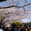 隅田川沿いをお花見散歩したので、その模様をお届けします!