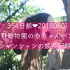 354日齢♥上野動物園の赤ちゃんパンダシャンシャンの成長記録♥