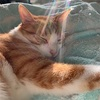 捨て猫を見つけたら助けたい!保護する方法【体験談】子猫の飼い方