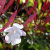 庭の花たち 2020 3/25