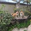 2匹の関係その2 - Relationship of Our Two Dogs Vol. 2