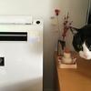 猫のフケと快適な湿度 加湿器を購入しました