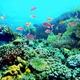ハワイにてサンゴ礁に有害な日焼け止めの使用が禁止へ!?今後どうなる?