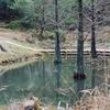 モネの庭・トンボ池(高知県北川)
