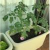 【レビュー】ベランダ菜園の環境をひととおり整えたので、購入した園芸用品を記録しておきます。