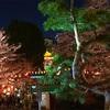 【上野恩賜公園】 東京都内で人気のお花見スポット