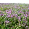 週末農園と江戸川の春の花々