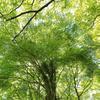 新緑の季節が一番好きかも。