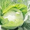 12月の旬な野菜