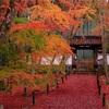 京都・洛西 - 地蔵院門前の敷紅葉