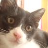 猫の2匹目の飼い方!トイレはいくつ?ケージは必要?