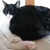 今日の黒猫モモ&白黒猫ナナの動画ー826