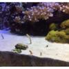 日本海を再現した展示に納得!新潟の水族館といえばマリンピア日本海だよね?