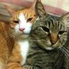 猫のベランダ飛び出し(脱走)防止対策!手作りの柵を100均で作る方法