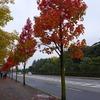 路地裏紅葉2016~「押小路通」