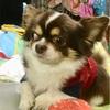 犬の手作り消臭剤〜ウチの場合は。アロマの香る消臭剤〜