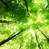 こころのクスリ ◆ 「よくわかる森田療法」