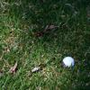『惜敗の松山英樹 メジャー最高位「良い感じでプレーできた」』を読んで ゴルフの雑談