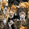 猫の種類♪人気猫の値段を調査してみた!