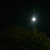 今日11月12日は満月。
