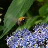 飛んでいるハチをフルオートで撮影