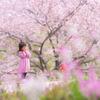 子どもと桜をコラボして撮ったら史上最高の写真が撮れてニヤニヤしている話